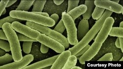 The e-coli bacteria could be identified and treated more quickly with new device.