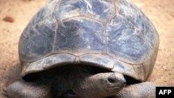 Galapagos là nơi sinh sống của rất nhiều loài chim chóc, động và thực vật quý hiếm
