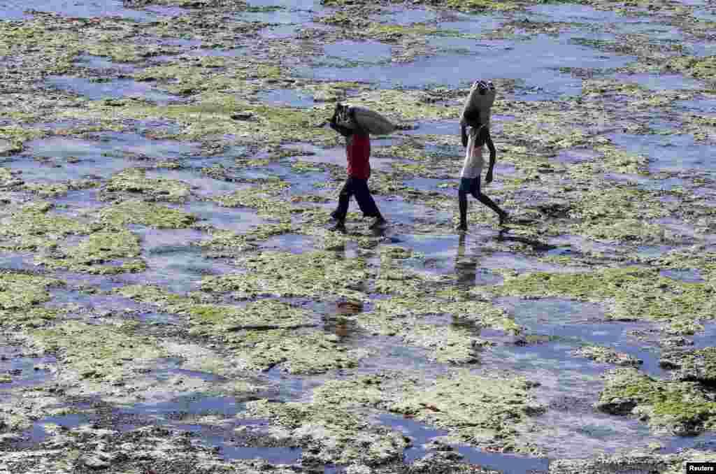 Hai người đàn ông vác bao sò ốc đi trên bãi biển Diani Beach, Ấn độ dương, thuộc vùng duyên hải Kenya cách thành phố Mombasa 30 kilômét về phía nam.