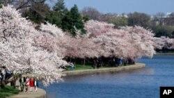 Park oko plimnog bazena rijeke Potomac, Tidal Basin