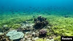 A shoal of fish swim over seagrass on the Saya de Malha Bank within the Mascarene plateau, Mauritius March 20, 2021. Tommy Trenchard/Greenpeace/Handout via REUTERS