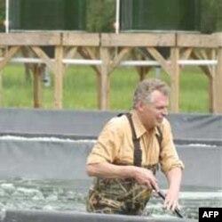 Uzgoj algi u Virdžiniji