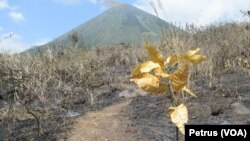 Musim kemarau dan angin kencang memudahkan api membakar hutan di kawasan pegunungan di Jawa Timur (Foto: VOA/Petrus)