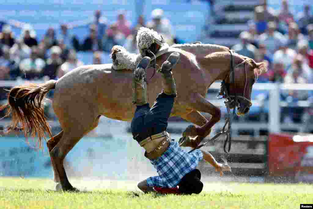 A gaucho is unseated by an untamed horse during the Creole week celebrations in Montevideo, Uruguay.