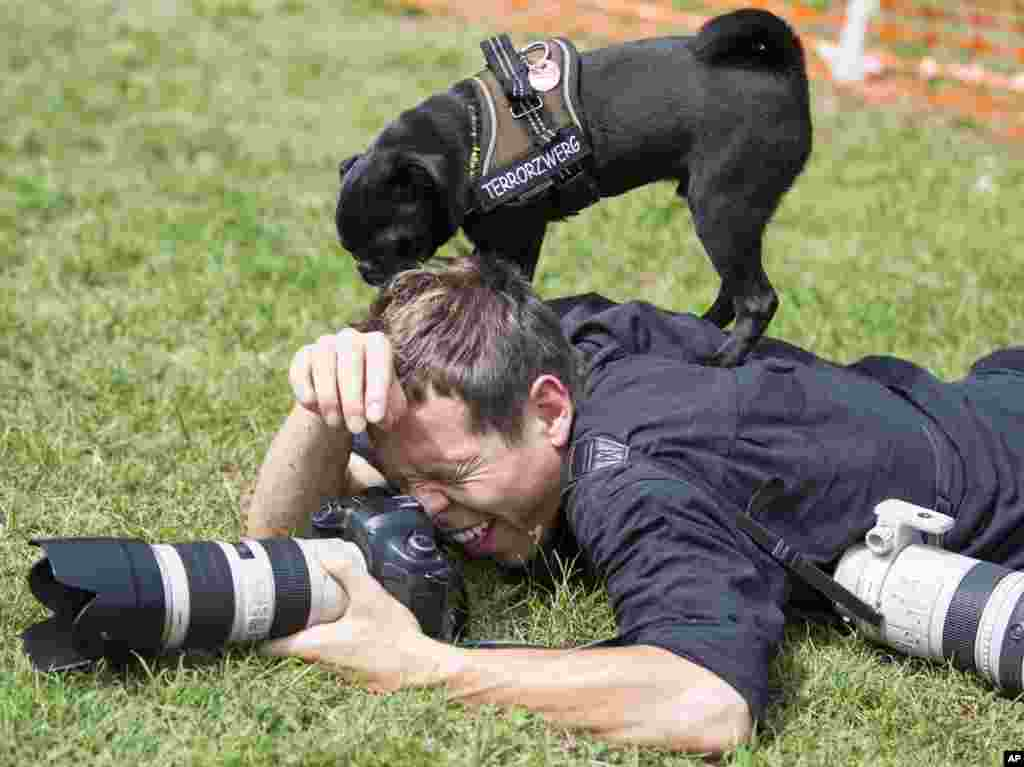 """A photographer reacts after a pup dog jumped on his back during a pup dog meeting in Berlin, Germany. Some 40 pup dogs and their owners met in Berlin for the """"4th International Pup Dog Meeting"""" including a dog race."""