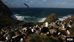 La soberanía de las islas Malvinas estará en debate en el seno de la OEA.