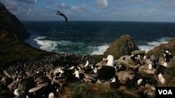 Las islas Malvinas siguen siendo un reclamo para Argentina, un territorio ocupado por Gran Brataña a las que denominan Falkland.