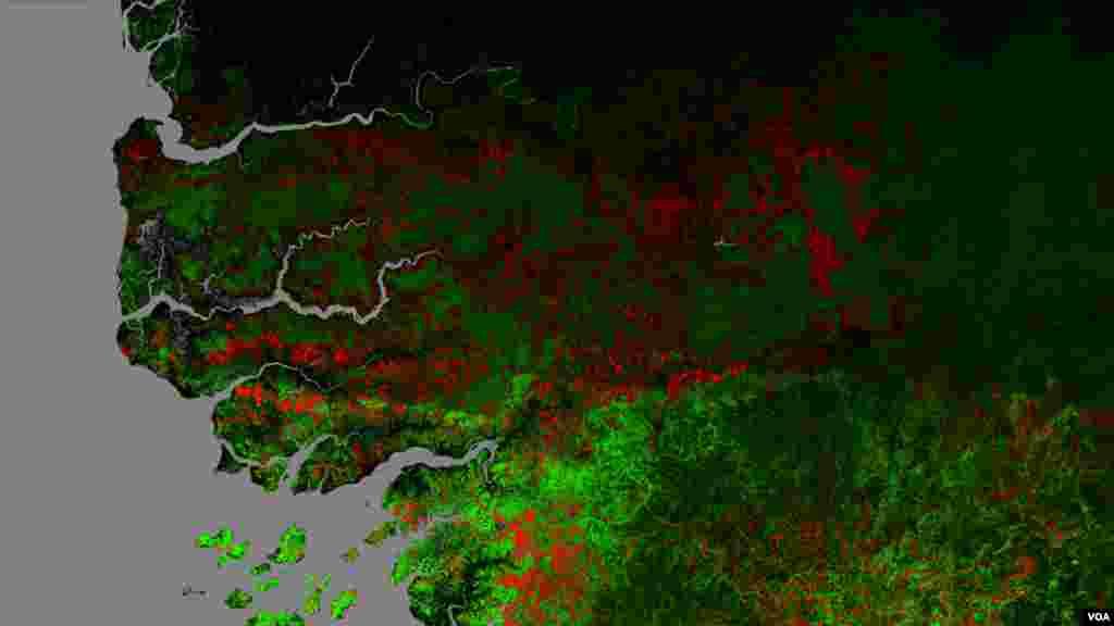 Image de la forêt de Casamance en 2015 avec en vert la surface forestière et en rouge la disparition de forêt de 2010 à 2015 (Université de Maryland USA)