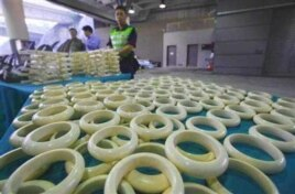 Customs officials in Hong Kong with illegal ivory products they intercepted in November last year. Some wildlife experts warn that a legal trade in ivory has previously resulted in an increase in the poaching of elephants for their tusks.