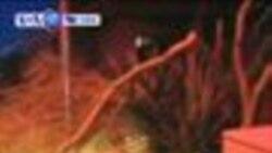 VOA美國60秒(粵語): 2012年8月1日