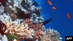 Vỉa đá Great Barrier là nơi sinh cư của hàng trăm ngàn loài hải vật, nhiều loại rất hiếm quý