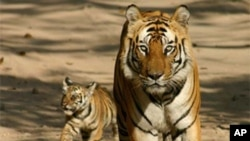 สัมภาษณ์เจ้าหน้าที่จากกระทรวงทรัพยากรธรรมชาติ และสิ่งแวดล้อมของไทย ที่การประชุมเรื่องการคุมครองเสือ ที่กรุงวอชิงตัน