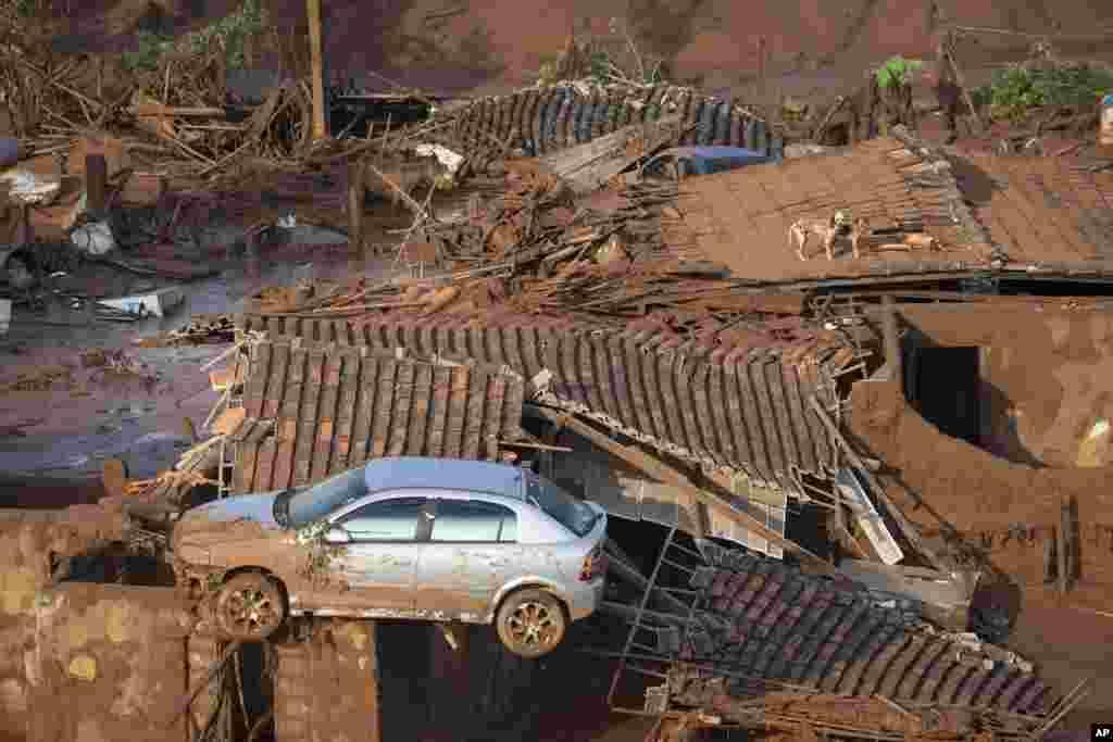Sebuah mobil dan dua anjing tampak di atap rumah yang hancur di kota kecil Bento Rodrigues setelah sebuah tanggul ambrol hari Kamis (5/11) di negara bagian Minas Gerais, Brazil. Tim penyelamat Brazil mencari korban selamat sepanjang hari Jumat setelah dua tanggul ambrol di tambang bijih besi di kawasan pegunungan sebelah tenggara.