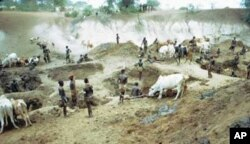During the dry part of the year, when the water table drops, the Nyangatom, Mursi and other tribes of the area dig deep holes in river beds to water their cattle and to get drinking water.