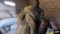 Un ancien migrant d'Italie et maintenant directeur de l'association des producteurs de riz, Pape Samba Diane, à Nganda, Senegal, le 6 décembre 2017.