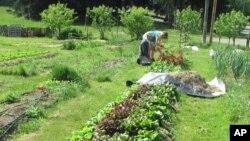 """En 2008, había alrededor de ocho millones de jardines de alimentos """"milenarios"""", pero esa cifra subió a 13 millones en 2013."""