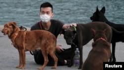 官方畜禽目錄擬將刪除狗類 專家指中國狗肉來源多為毒盜