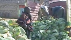 Kenyan Farmers Call for Government to Assist with Food Distribution