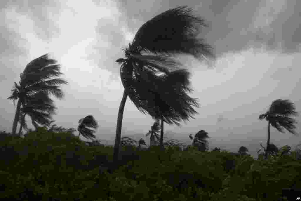 Wind blows coconut trees during the passage of Hurricane Matthew in Port-au-Prince, Haiti, Oct. 4, 2016.