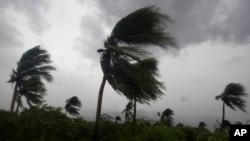 Gió thổi bạt những cây dừa khi cơn bão Matthew đổ bộ vào thủ đô Port-au-Prince, Haiti, ngày 04 tháng 10 năm 2016.