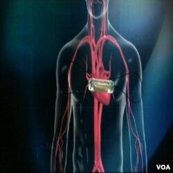 Perubahan gaya hidup dapat meningkatkan kesehatan jantung Anda.