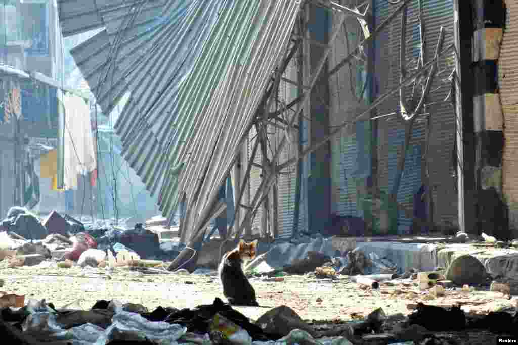 A cat sits in the damaged old souk of Homs, November 15, 2012.