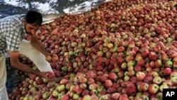 بھارتی کشمیر میں زرعی خود کفالت کی کوششیں