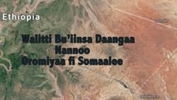 Angawoota : Godiina Harargee Bahaa fi Dhiyaa Keessatti Liyyuu Hayilin Oromoota Torba Ajjesee