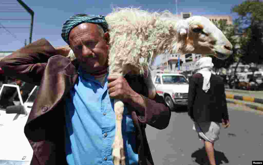 A man carries a sheep through a livestock market in Sanaa, October 24, 2012. Muslims around the world celebrate Eid al-Adha to mark the end of the Hajj by slaughtering sheep, goats, cows and camels.