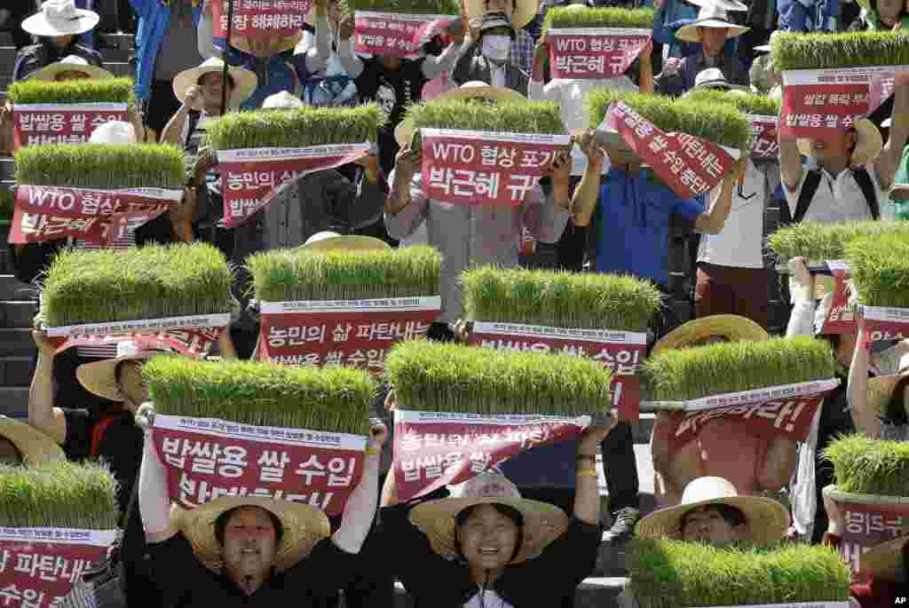 Farmers hold seedbeds of rice over their heads as they shout slogans during a rally to protest the government's planned rice imports for meals that they fear will lead to a fall in the price of the locally produced rice in Seoul, South Korea.
