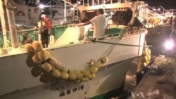 Fukushima Radiation Traced in Pacific Seafood