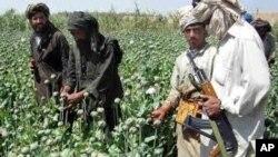 پولشویی درآمد مخدرات یکی از منابع تمویل طالبان عنوان شده است
