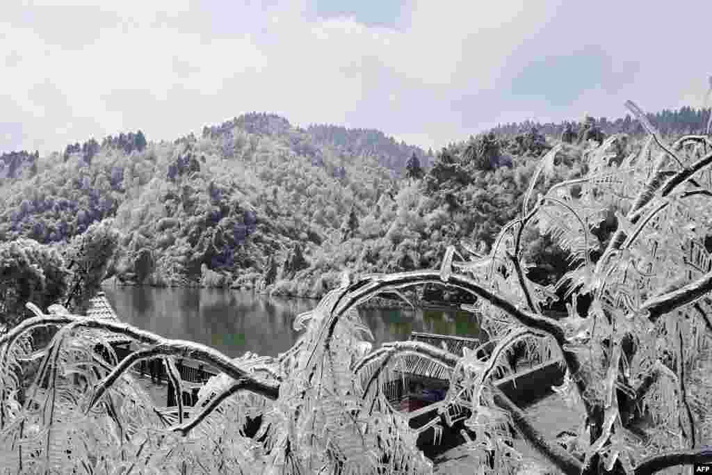 중국 동부 저장성 항저우의 나뭇가지가 얼음에 덮여있다. 중국을 비롯한 동아시아 지역에는 최근 한파가 찾아왔다.