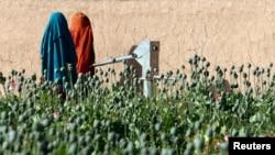 افیون کے کھیت میں موجود افغان خواتین