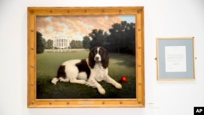 A New Dog Museum for New York