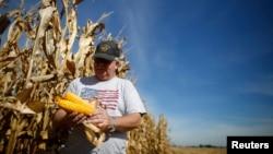 伊利諾伊州農民收割期間檢查玉米(2014年9月24日)