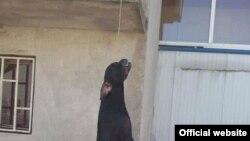 Leš psa je otkriven u mjestu Daljam (rtcg.me)