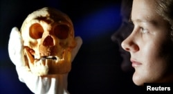 A model of a Homo floresiensis skull — the original was found on a remote Indonesian island — is held by an employee at the Science Museum in London.