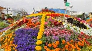 کراچی کے ساحل پر پھولوں کی نمائش