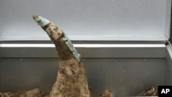 Une corne de rhinocéros.
