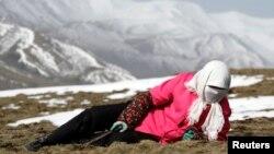 中国青海省西部贵德县拉鸡山当地藏民在寻找冬虫夏草