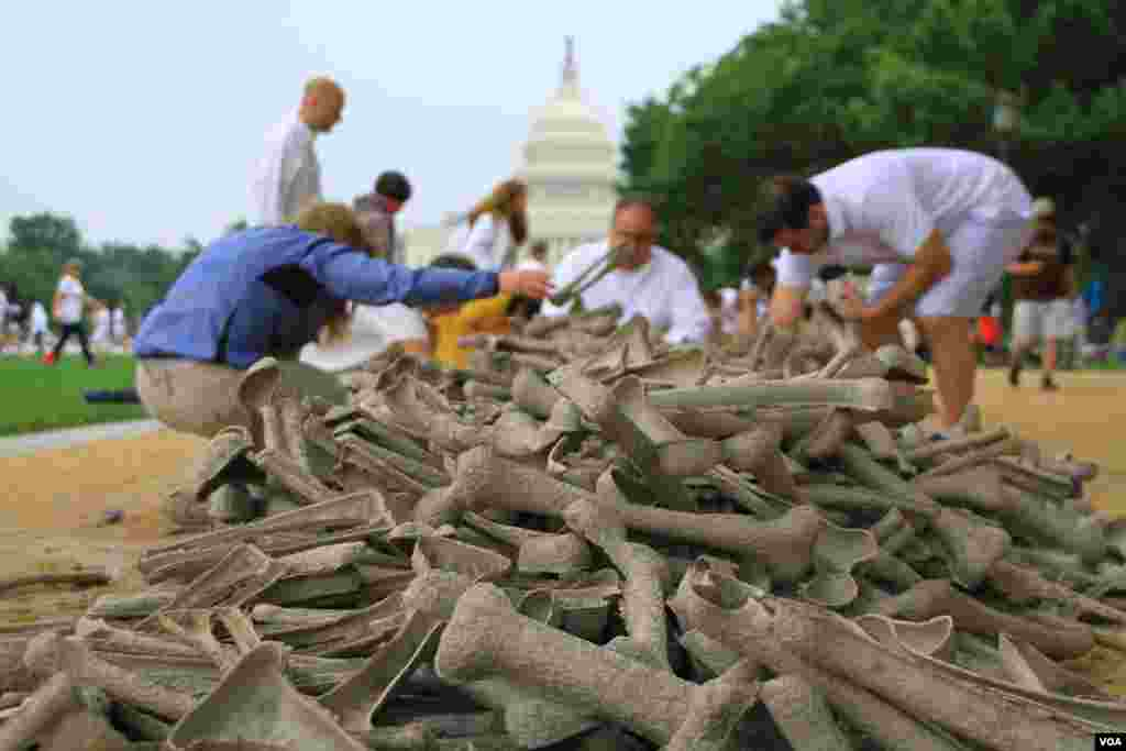 "Volunteers select artificial bones to display on the National Mall, Washington, D.C, on June 8, 2013, at the ""One Million Bones"" installation, which aims to raise awareness of genocide and atrocities. (Jill Craig/VOA)"
