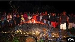 Los pobladores se mantienen en alerta por la posible presencia de otros cocodrilos gigantes en los alrededores del poblado.