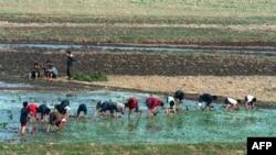 رپورٹ کے مطابق شمالی کوریا خوراک کے بحران پر قابو پانے کے لیے کوششیں کر رہا ہے۔ (فائل فوٹو)