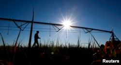 FILE - Farmer Ian Shippen walks past a mobile irrigation boom on a dying oat crop on his farm in the heart of Australia's Murray-Darling river basin outside Moulamein, about 600km (373miles) west of Canberra, Aug. 24, 2007.