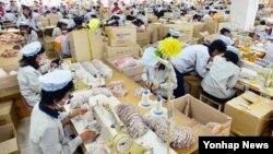 지난해 9월 개성공단 내 한국 공장에서 북한 근로자들이 제품을 생산하고 있다. (자료사진)