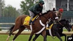 参加肯塔基赛马的马匹在接受训练