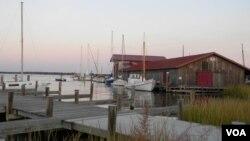 El caso registrado en el Chesapeake, en Maryland, se trata del más reciente de muerte masiva de peces y pájaros en el mundo.
