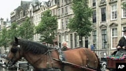 A horse-drawn carriage in Amsterdam
