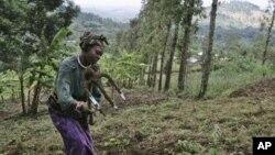 Dalam mengatasi dampak perubahan iklim, sebagian petani di Afrika Timur berinisiatif memulai metode-metode pertanian inovatif, di antaranya dengan menanam pohon guna menghentikan erosi dan meningkatkan kualitas air dan tanah (foto: dok).